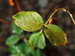 Lluvia sobre las hojas