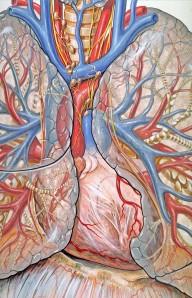 Ilustración médica de P. J. Lynch.